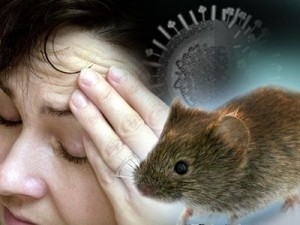 1396441528_myshinaya-lixoradka-simptomy