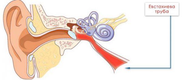 Постоянные отиты и воспаление евстахиевой трубы