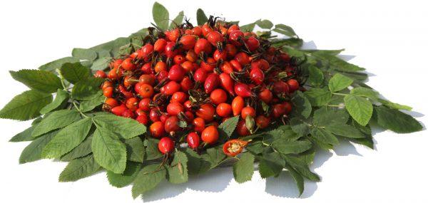 ягода шиповника для лечения простуды