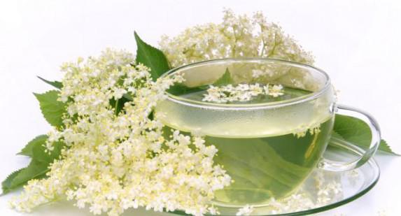 цветки бузины при лечении лающего кашля