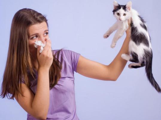 домашние животные от аллергического кашля