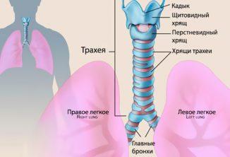 хронический трахеит