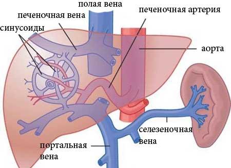 Причины портальной гипертензии