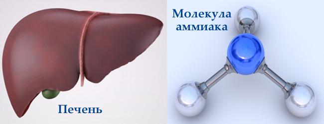 ammiak-v-krovi