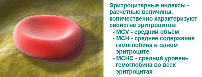 analizy-dlya-diagnostiki-anemii
