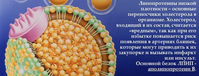 apolipoprotein-b