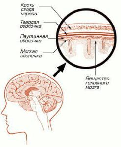Структура оболочек мозга