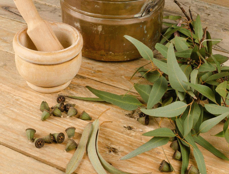 content_inhalation-of-a-cold---recipes-based-on-herbs-and-essential-oils