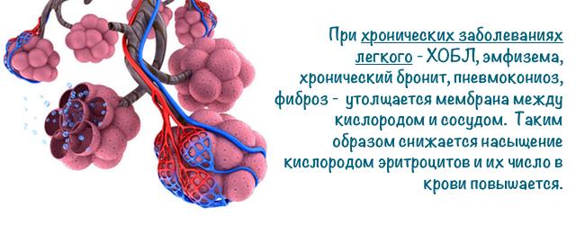 eritrocity-krovi