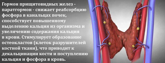 fosfor-v-krovi-i-moche