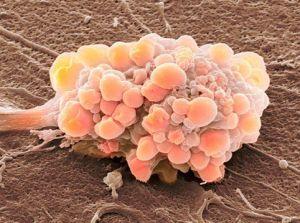глиальные клетки
