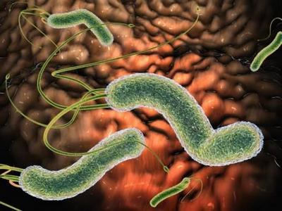 Нelicobacter