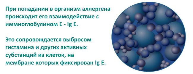 immunoglobulin-e