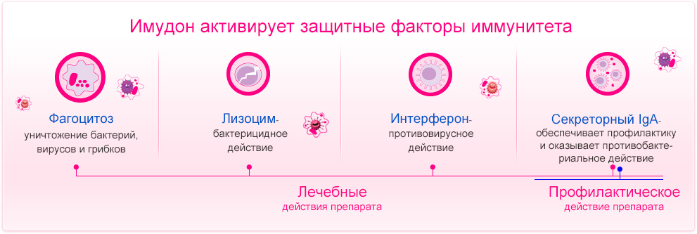 Имудон активирует защитные факторы иммунитета