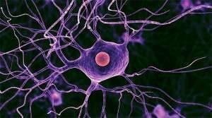 Здоровье нейронов