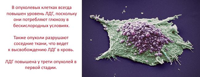 ldg-laktatdegidrogenaza