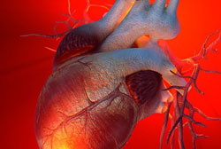 Развитие легочного сердца