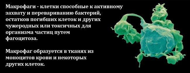 lejkocity-krovi