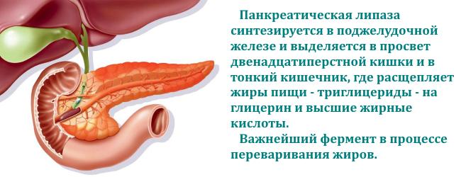 lipaza-podzheludochnoj-zhelezy