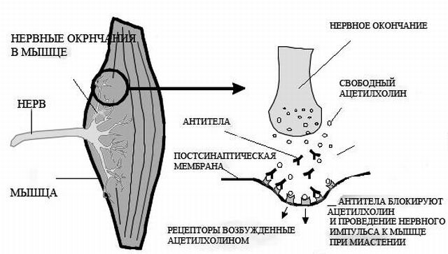 уровни повреждения спины при травме