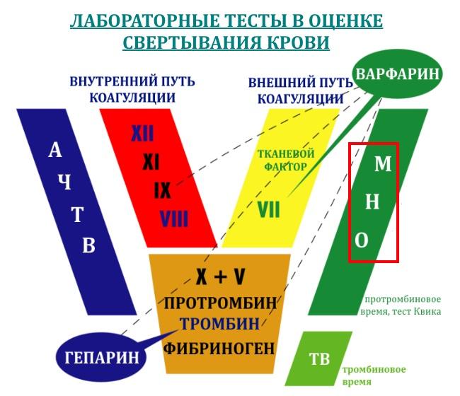 mno-mezhdunarodnoe-normalizovannoe-otnoshenie