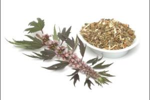 В народной медицине заваривают чаи на основе пустырника, делают настойки