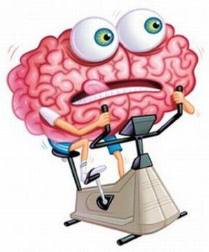образование в мозгу