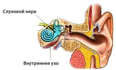 Расположение слухового нерва