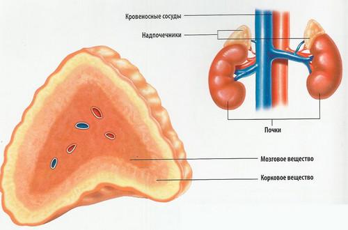 Острая надпочечниковая недостаточность (острый гипокортицизм)
