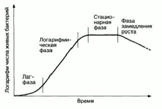 кривая роста бактериальной популяции