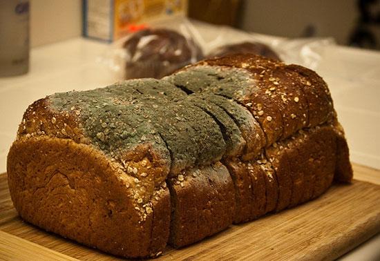 порча хлеба грибком