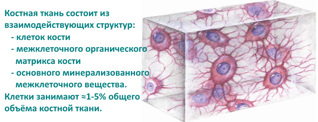 stroenie-kostnoj-tkani