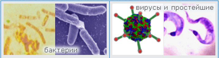 Объекты микробиологии.