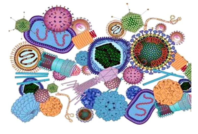 Разнообразие вирусных частиц.