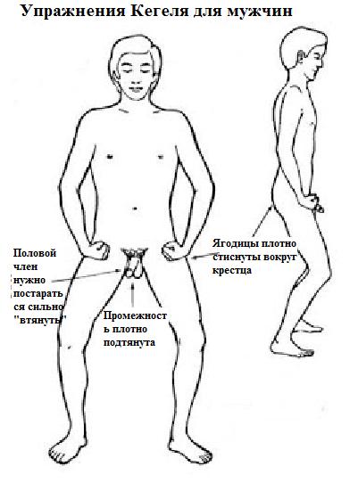 Упражнения Кегеля для мужчин