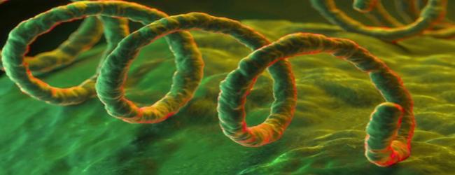 vrozhdennyj-sifilis-u-novorozhdennogo
