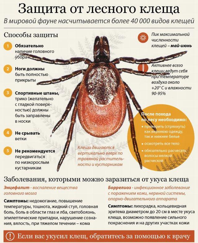 защита от энцефалита