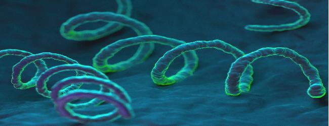 zarazhenie-sifilisom